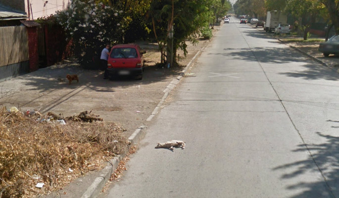 dog hit by google car