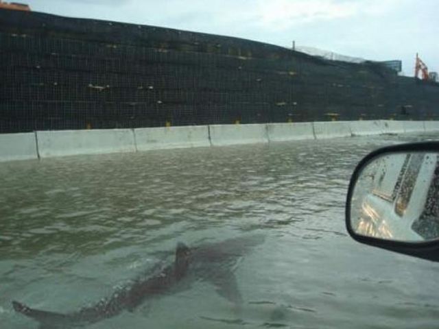 Horrifying photo of a shark swimming down the highway in Houston.