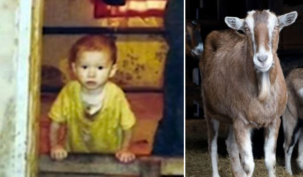raised by goats