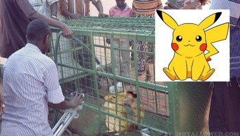Pikachu Caught In Africa