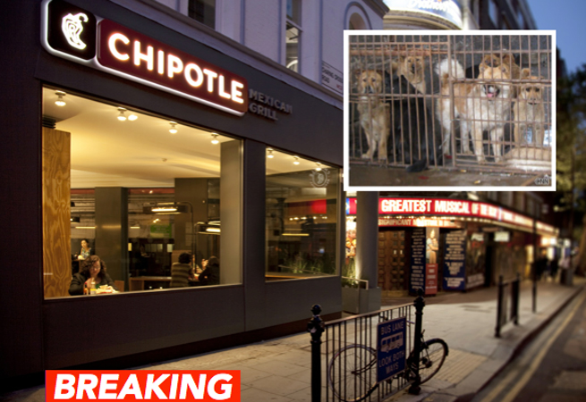 Chipotle Mexican Grill using infected meat
