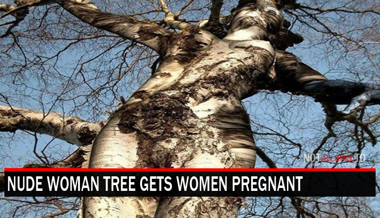 Tree That Resembles Woman