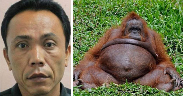 orangutan and human