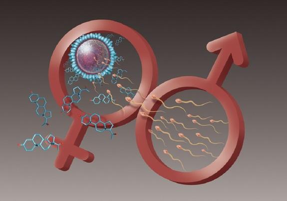 Reproductive Cells Eggs