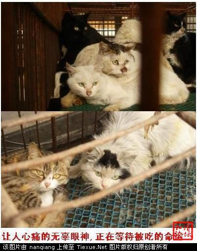 cat mean in china