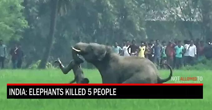 wild animal kills human