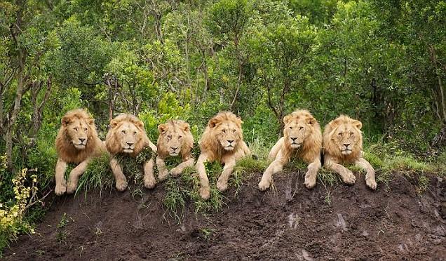 wild life of africa wild animals