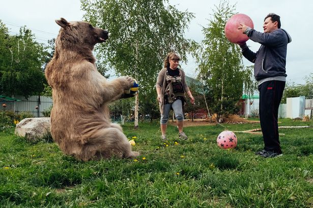 bear playing football