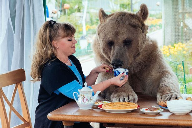bear eating on table