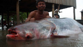 giant caught in river