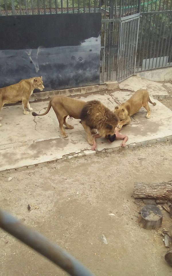 man and lion in zoo