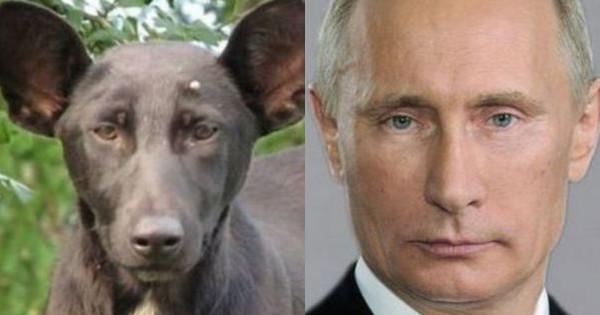 dog murdered