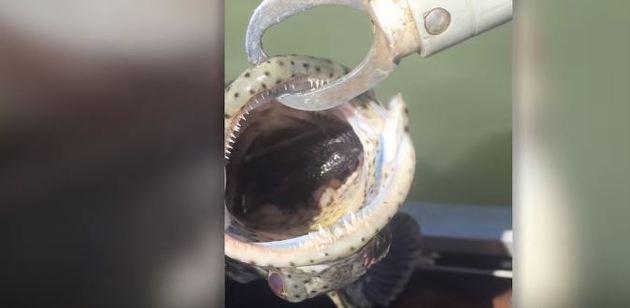 Safe Fish inside penis