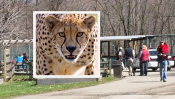 the cheetah in zoo