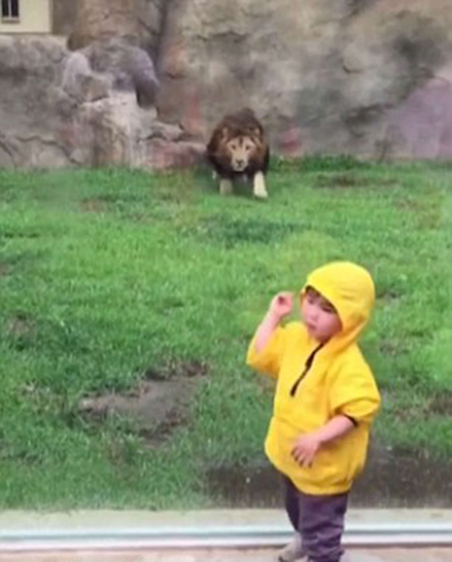 animal attack in zoo