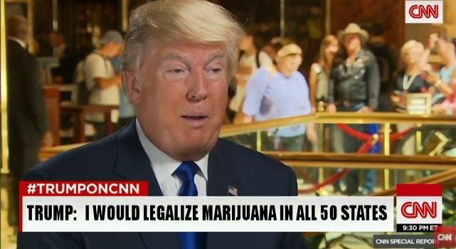 trump weed
