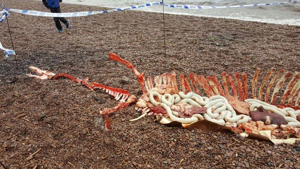 sea monster found dead